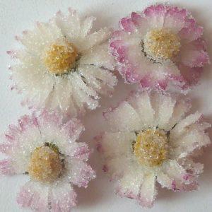 Kandierte Gänseblümchen, Ihre Genuss-Agentur