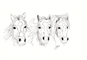 Kunstkarten Pferde, Drei Pferdegesichter, art-cavallo